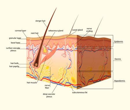 dermatologues